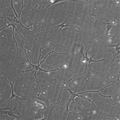 细胞培养服务