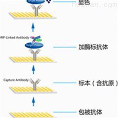 酶联免疫实验检测