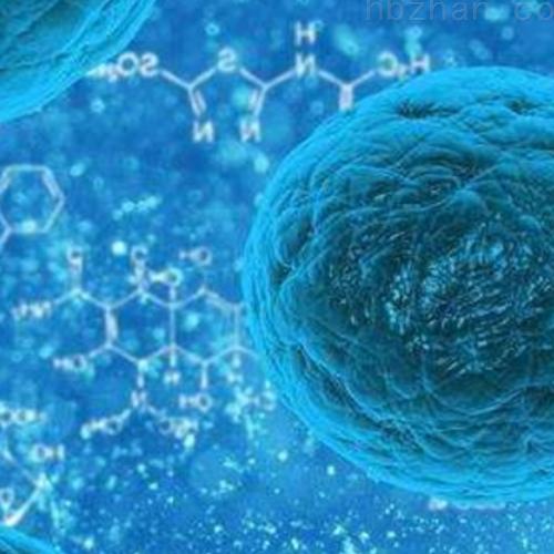 肝瘤血管内皮细胞实验