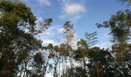 深耕空气净化13年 碟莱环境带着6大解决方案来了