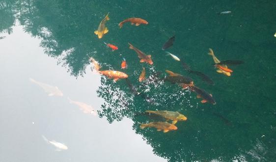 5.54亿!广西省钦州市钦北区城镇污水处理设施PPP项目招标