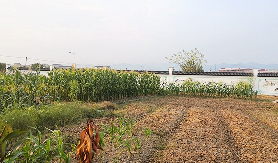 农业农村部:计划实施农村人居环境整治提升五年行动