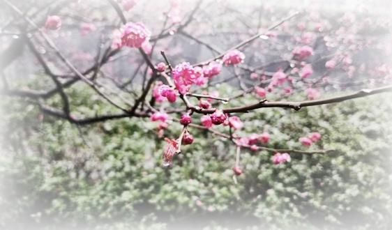 北京市延庆区聚焦特色园艺引领发展生态旅游