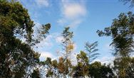 國務院印發《2030年前碳達峰行動方案》