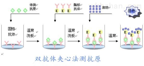 <strong><strong>小鼠载脂蛋白B100(ApoB100)elisa试剂盒</strong></strong>